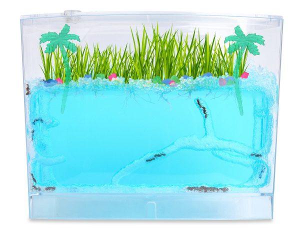 Ecosystem-Ant-Habitat-PalmsC
