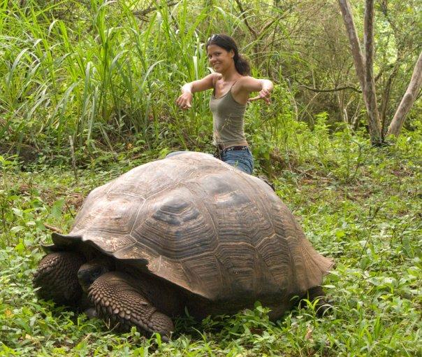 Galapagos Tortoise. Photo: EngineerShorty