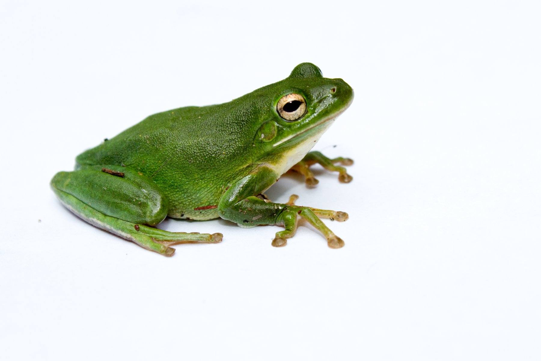 Green Tree Frogs Learn About Nature