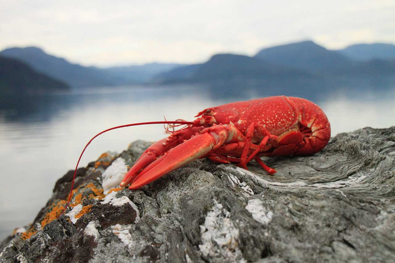 Learn About Nature Lobster Learn About Nature