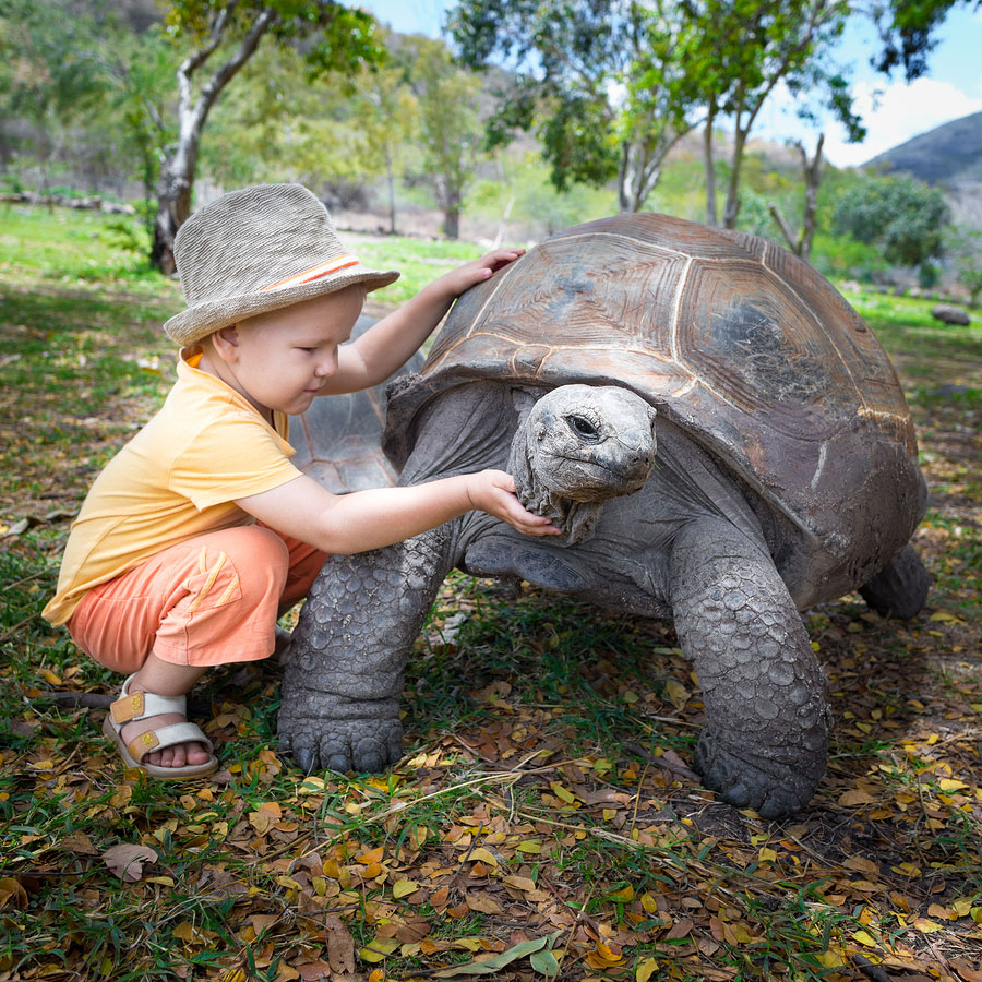 Tortoise Facts - Learn About Nature
