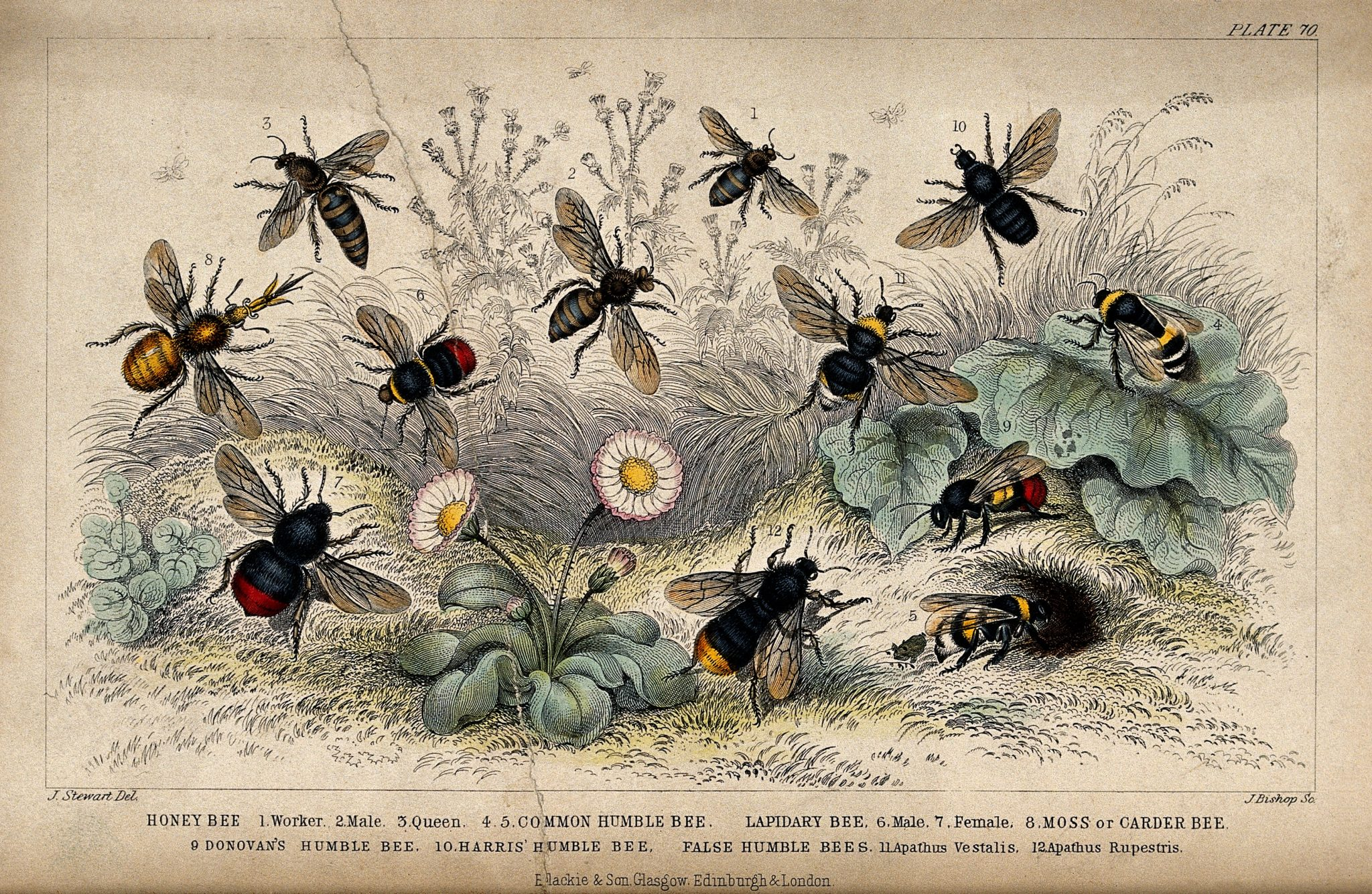 Learn about Nature | Different Types of Bees: How Can You ... - photo#11