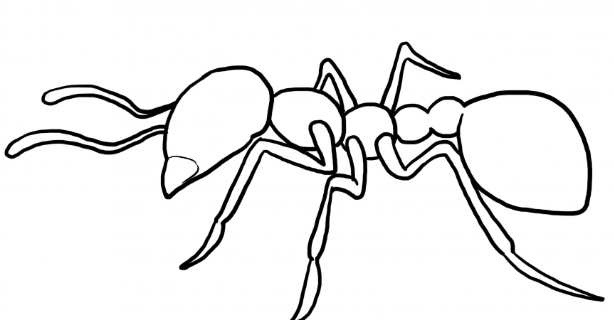 Ant Coloring Page Learn About Nature
