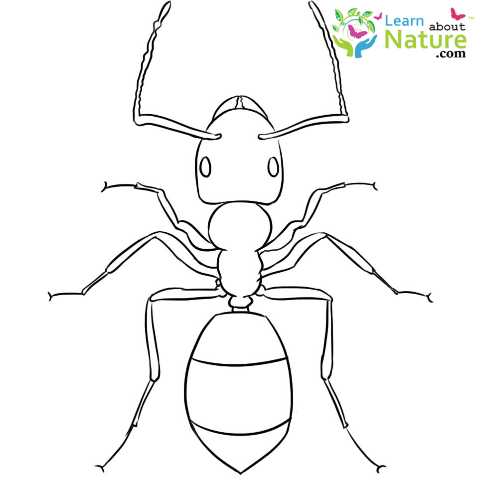 Ant Coloring Page Thumbnail