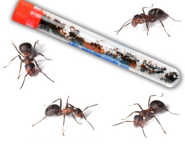 ant-vial-only-with-ants-surrounding-vial