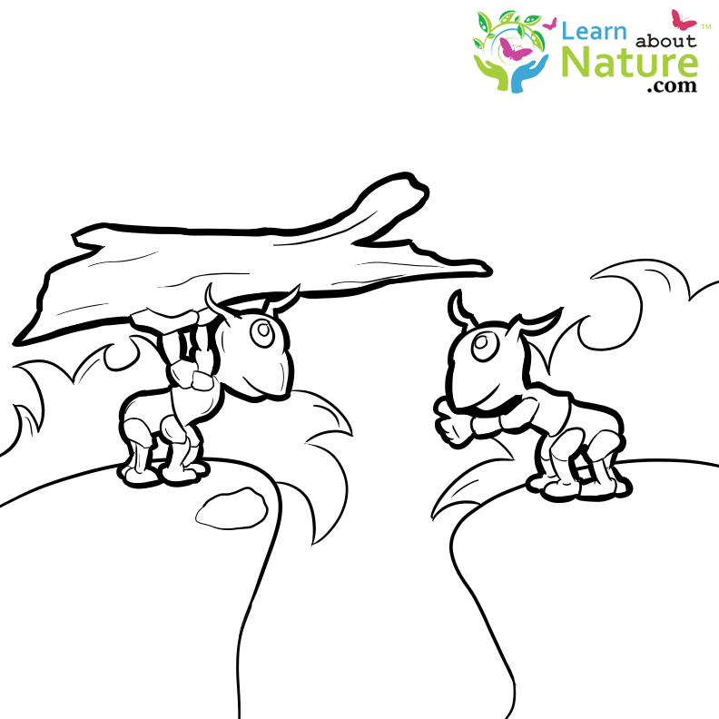 Ants Coloring Page Learn About Nature