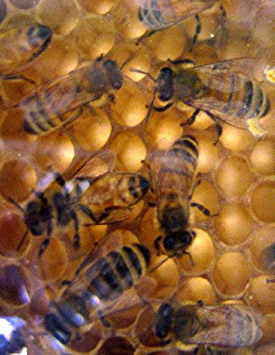 bees-in-hive2.jpg