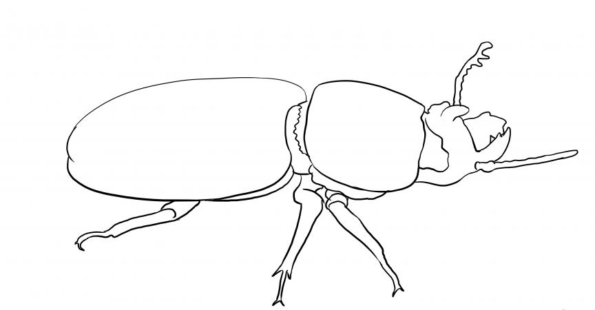 раскраска жук носорог распечатать предпочитает