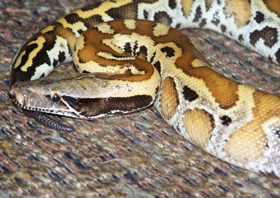 Detailed Article about Types of Snakes