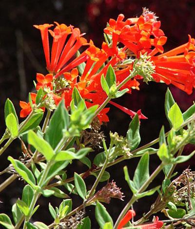May Flowers: Bouvardia Flowers