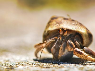 Pet Hermit Crab Facts's Thumbnail