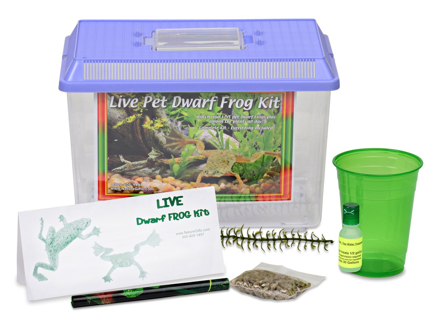 Watch How to Care for African Dwarf Frogs video