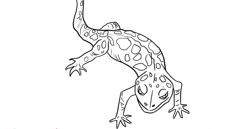 Gecko Coloring Page - Learn About Nature