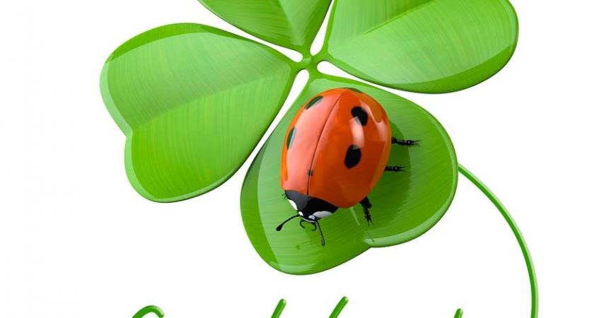 Are Ladybugs Good Luck Learn About Nature