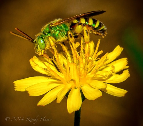 About Green Bees