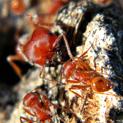 Fun article talks about what ants eat. They eat all sorts of things! Sweets, protein, more