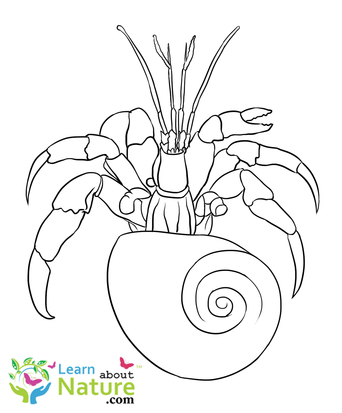 A house for hermit crab activities - games - printables Coloring pictures of hermit crabs
