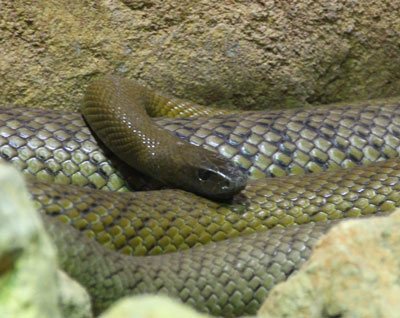Detailed Article about Diet of Snakes