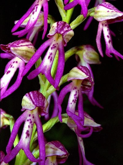 July Flowers: Orchid