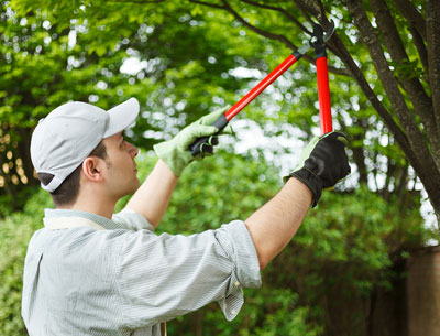 Tree Trimming (Pruning)