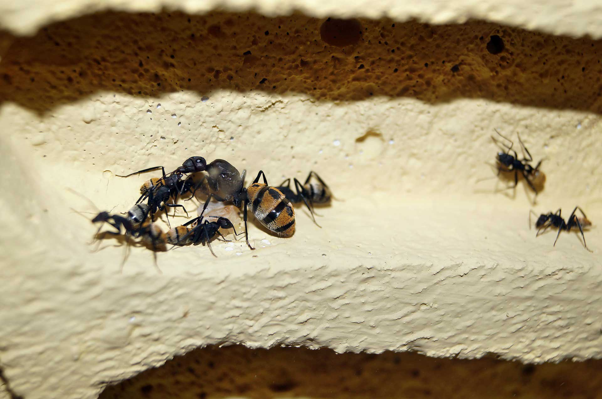Queen Ants Learn About Nature