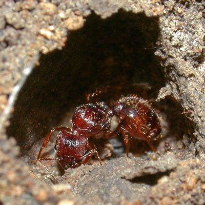 Detailed Article about Queen Ants
