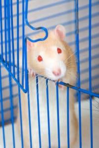 rat-cage02.jpg