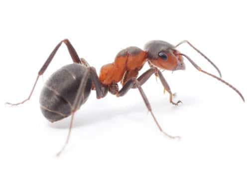 Fun article talks about what ants eat. They eat all sorts of things! Sweets, protein, more!