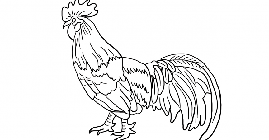 Rooster Coloring Page - Learn About Nature