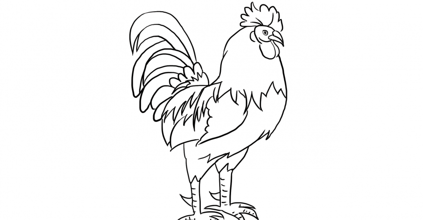 Rooster Coloring Page Learn About Nature