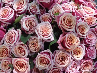 June Flowers: Roses
