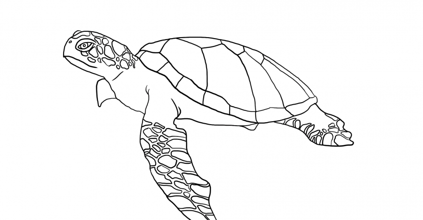 Turtles Coloring Page Learn About Nature