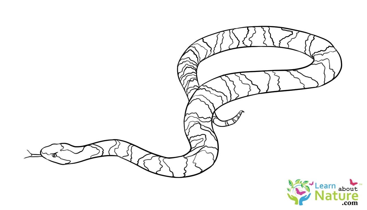 snake-coloring-page-2 - Learn About Nature