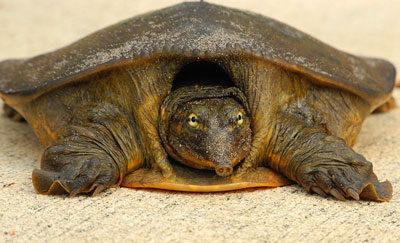 Different Types of Turtles - Learn About Nature