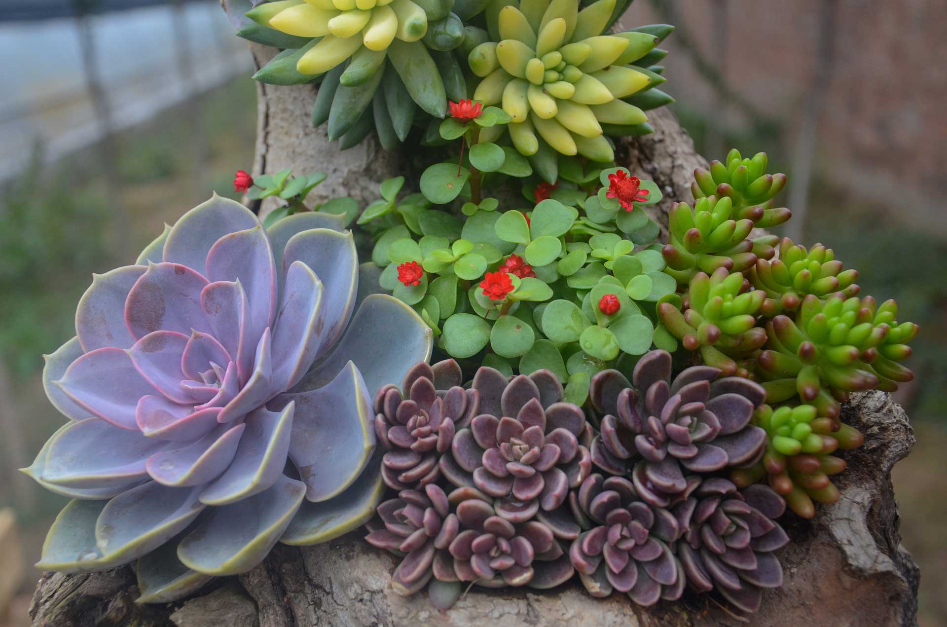 types of succulents learn about nature. Black Bedroom Furniture Sets. Home Design Ideas