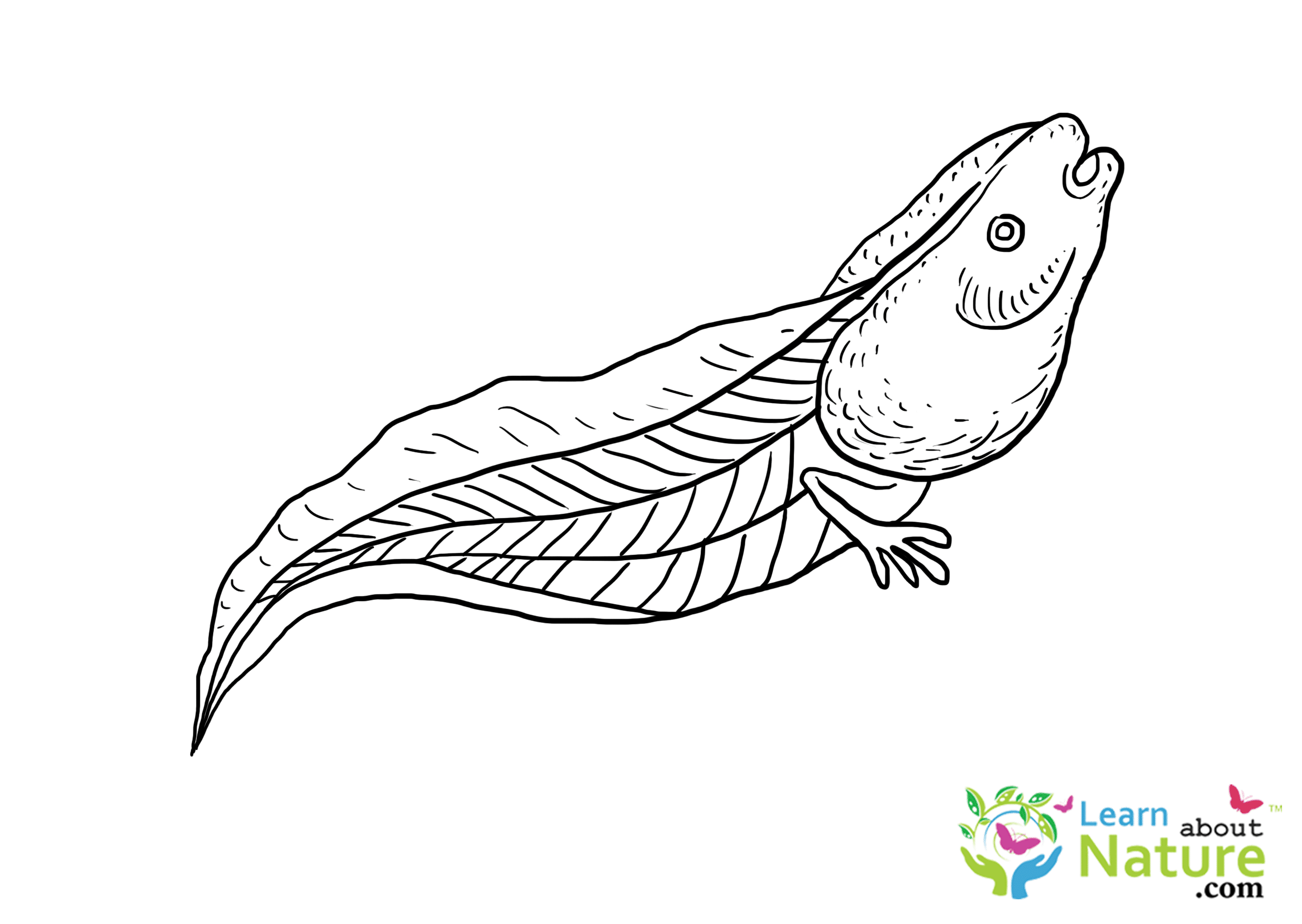 tadpole and froglet coloring page free printable coloring pages ...