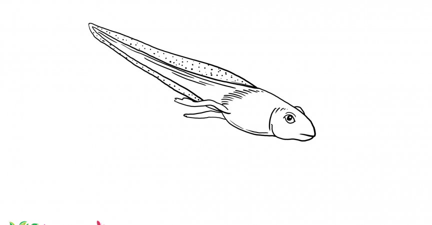 Tadpole Coloring Page - Learn About Nature