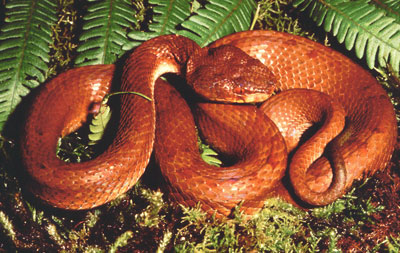 Detailed Article about Pit Vipers