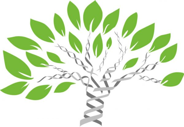 tree-of-life-02