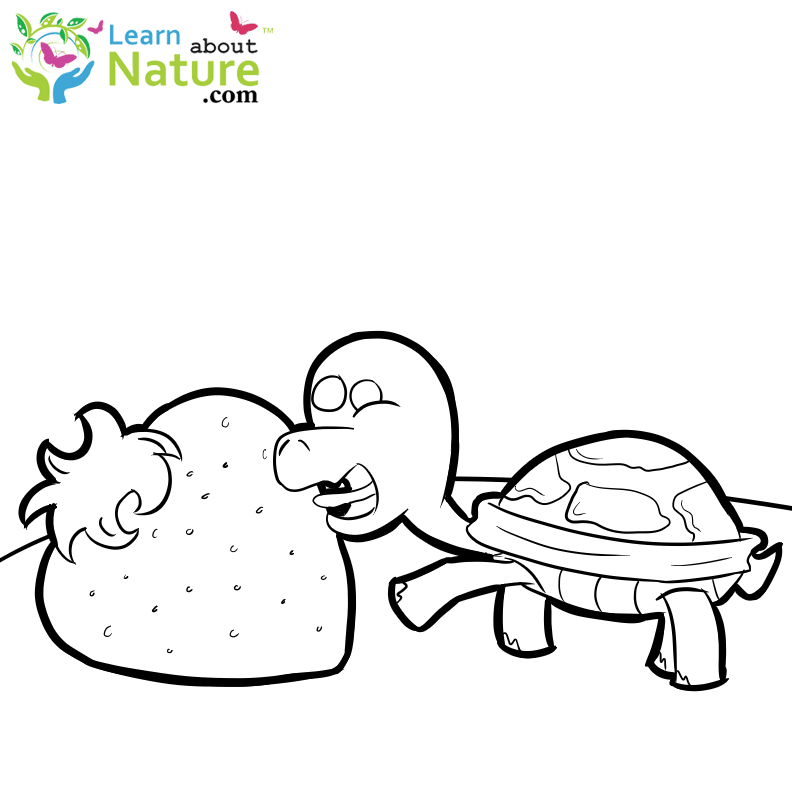 Turtles Coloring Page Thumbnail