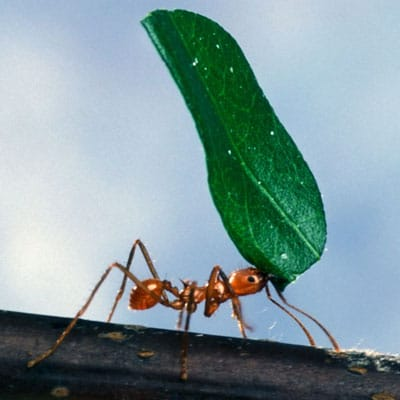 Fun article talks about how long do ants live